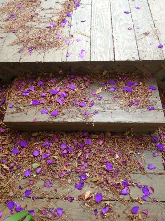 petals risers B