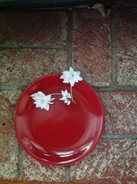 red plate starburst 1