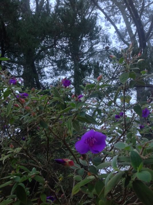 mist purple + digger pine.jpg postgutenberg@gmail.com
