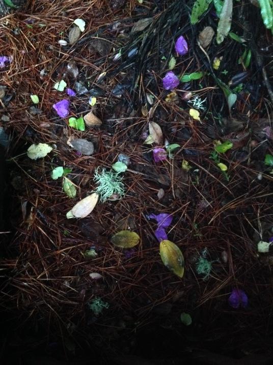 moss leaves.jpg postgutenberg@gmail.com