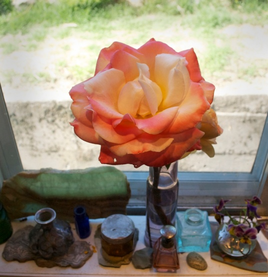 Lucinda's rose LARGER June 2015 IMG_7530