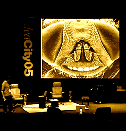 Dr. Josef Penninger at ideacity05 in Toronto with, above: Henri Rousseau's 'The Football Players' (1908); a 'genetically modified' fruit fly with human teeth. Below: lovestruck fruit flies with Rousseau's Eve (1904); Frido Kahlo's 'The Two Fridas,' fronting for ACE2, the protein molecule subverted by the SARS virus. -- Slides by Barry Dickson in screen shots by postgutenberg[at]gmail.com