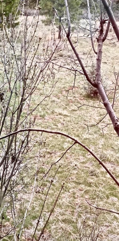 lilac buds 4 april 2018 postgutenberg@gmail.com SC