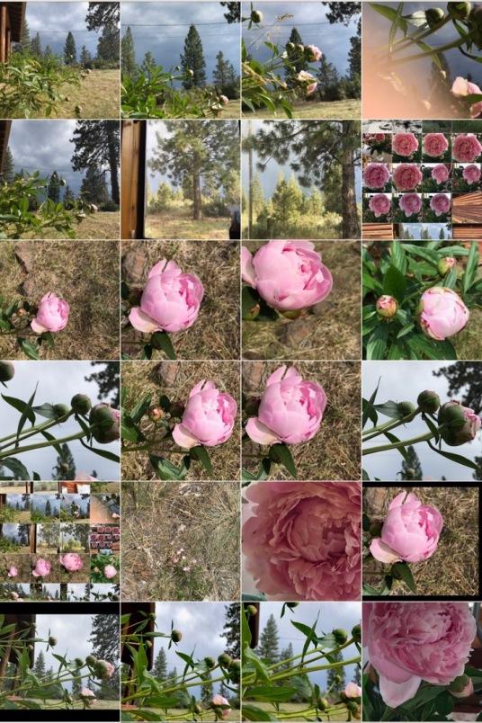 spring-summer panel.jpg postgutenberg@gmail.com.jpg