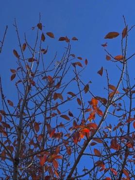 autumn leaves (2) 2018 postgutenberg@gmail.com