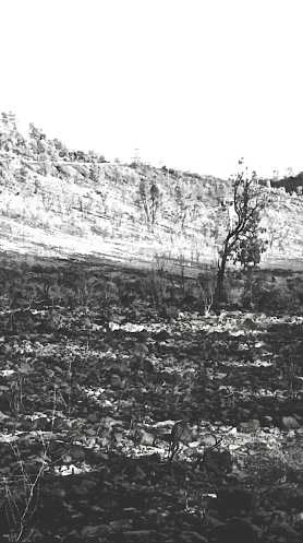 lone burnt tree postgutenberg@gmail.com