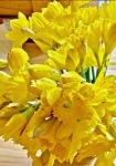 Easter 2019 (3) postgutenberg@gmail.com